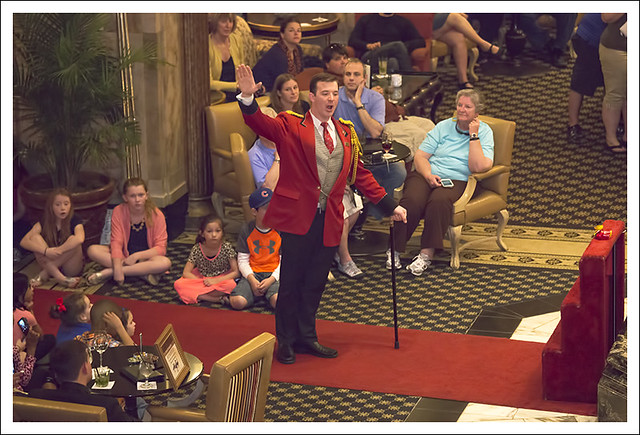 Peabody Hotel Ducks 2015-04-11 3