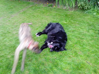 Lucy & Murree at play