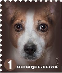 01 Timb J Jack Russel Terrier