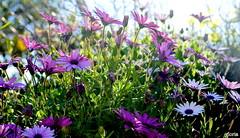 Colores de primavera.