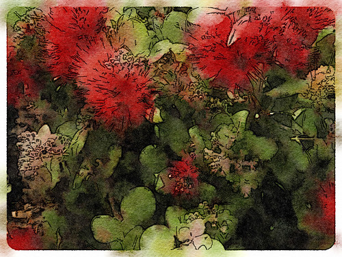 Bottle Brush Plant Edited in Waterlogue Photo App Using the 'Rainy' Style