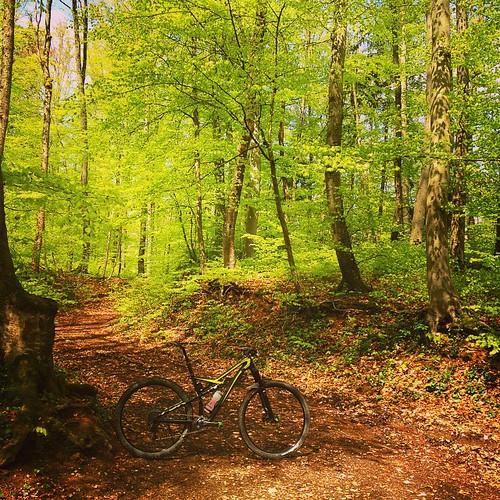 Greeeeeeen, yeah.... #frühling #grün #green #specialized #iamspecialized #camber_expert_evo #mtb #mountainbiking #liestal #vtt #vitaminD #sonnepur