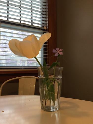 Cora's flowers