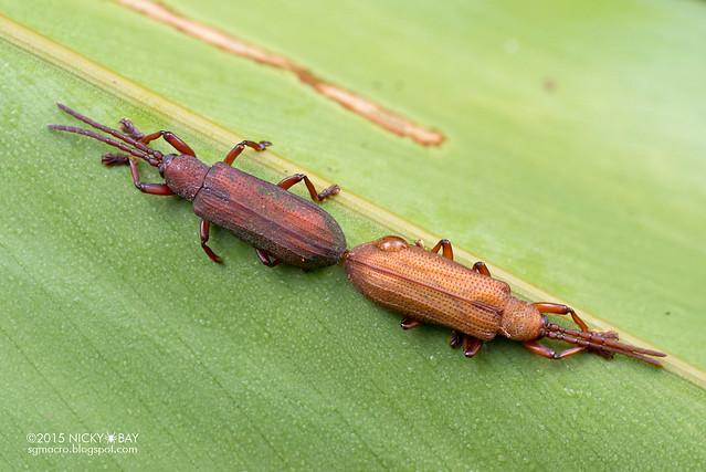 Beetles - DSC_3794