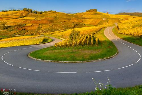 road france nature automne landscape vineyard wine alsace vin temps paysage vigne flore themes turckheim paysagesdalsace