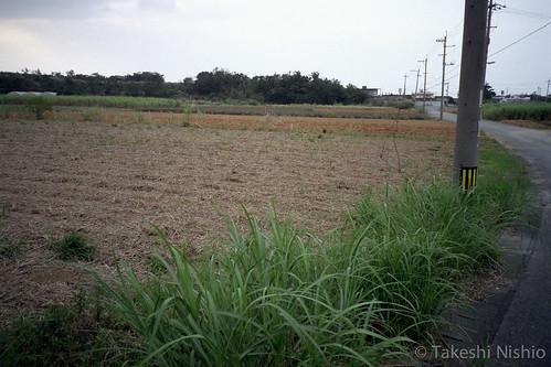 畑が広がる / farm