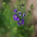 FLOWER by akfoto