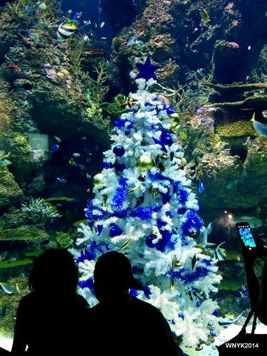 Underwater Christmas