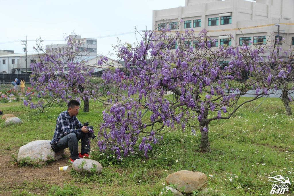 淡水紫藤咖啡園30