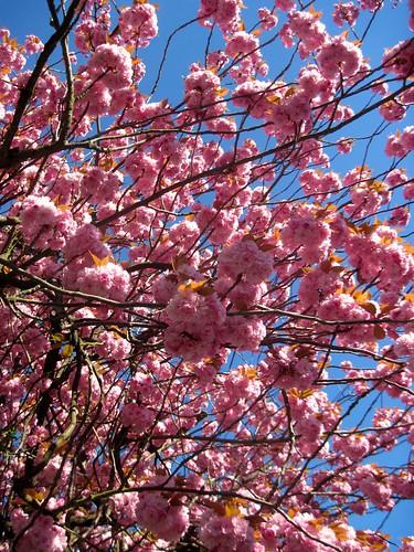 Springtime in Highgate
