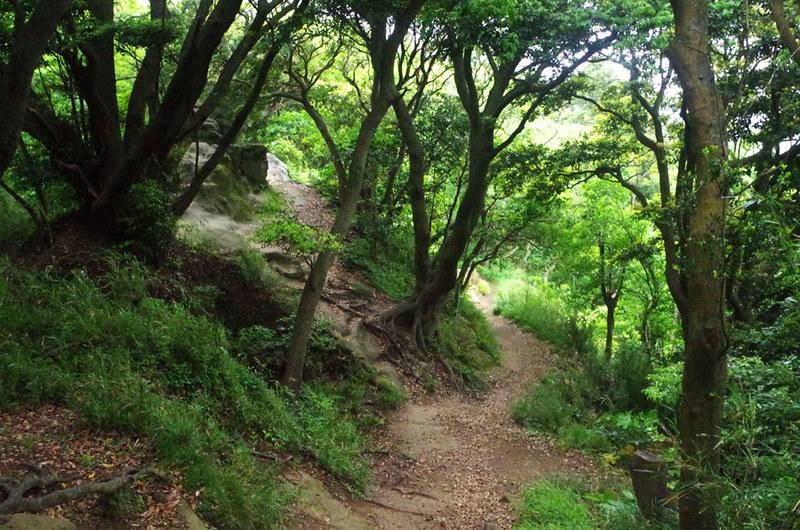 toomilog-tengoku_Hiking_trail008
