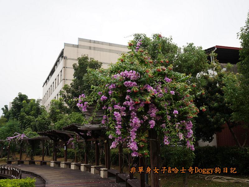 高雄鳳山車站中華街夜市曹公廟曹公圳平成炮台17