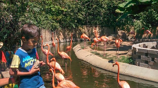 Zoo Day, Mismaloya