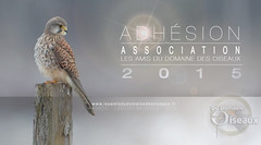 Adhesion Association LADDDO 2015
