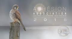 Adhesion Association LADDDO 2015