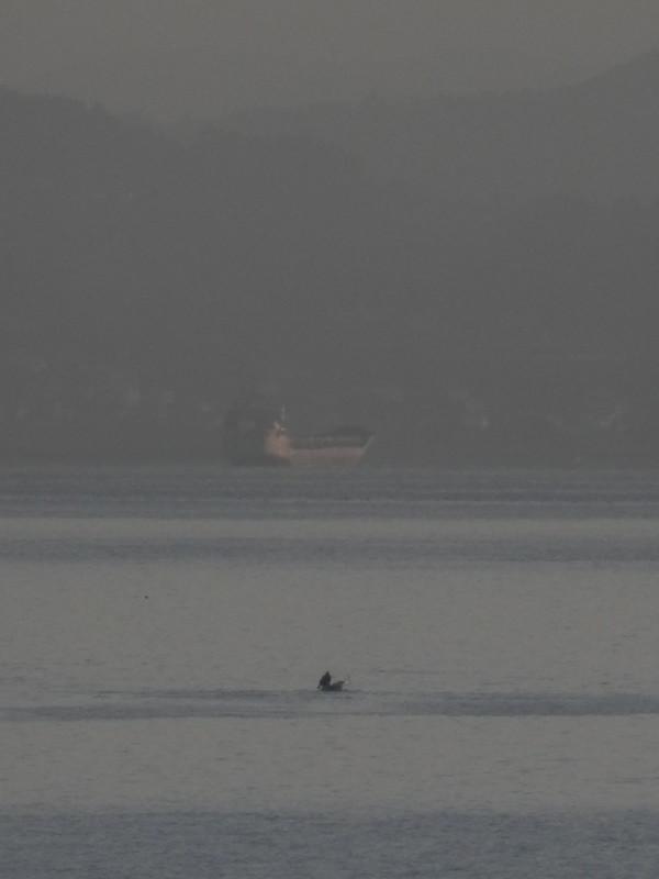 Barquero y carguero