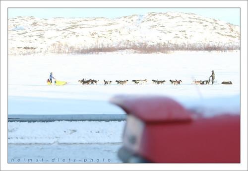 Finnmarkslopet: Aus dem Auto geschossen ...