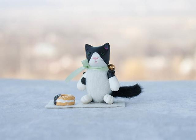 plump tuxedo cat