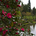 Japanese garden by Sergiy Matusevych