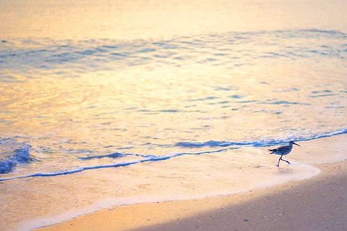 ocean beach sunrise dawn florida sandpiper indalantic