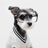 Fashion brand replaces models with stylish dogs