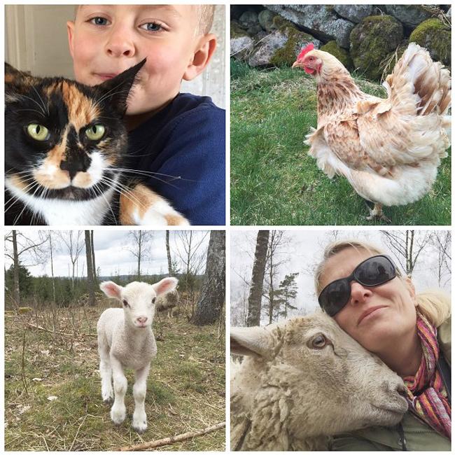 gulliga djur och vi