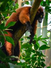 animal, branch, primate, fauna, jungle, wildlife,