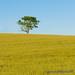 100 Days of Summer #10 - Scarecrow by elviskennedy