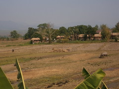 Rice Fields, Buffalo, Guest Houses