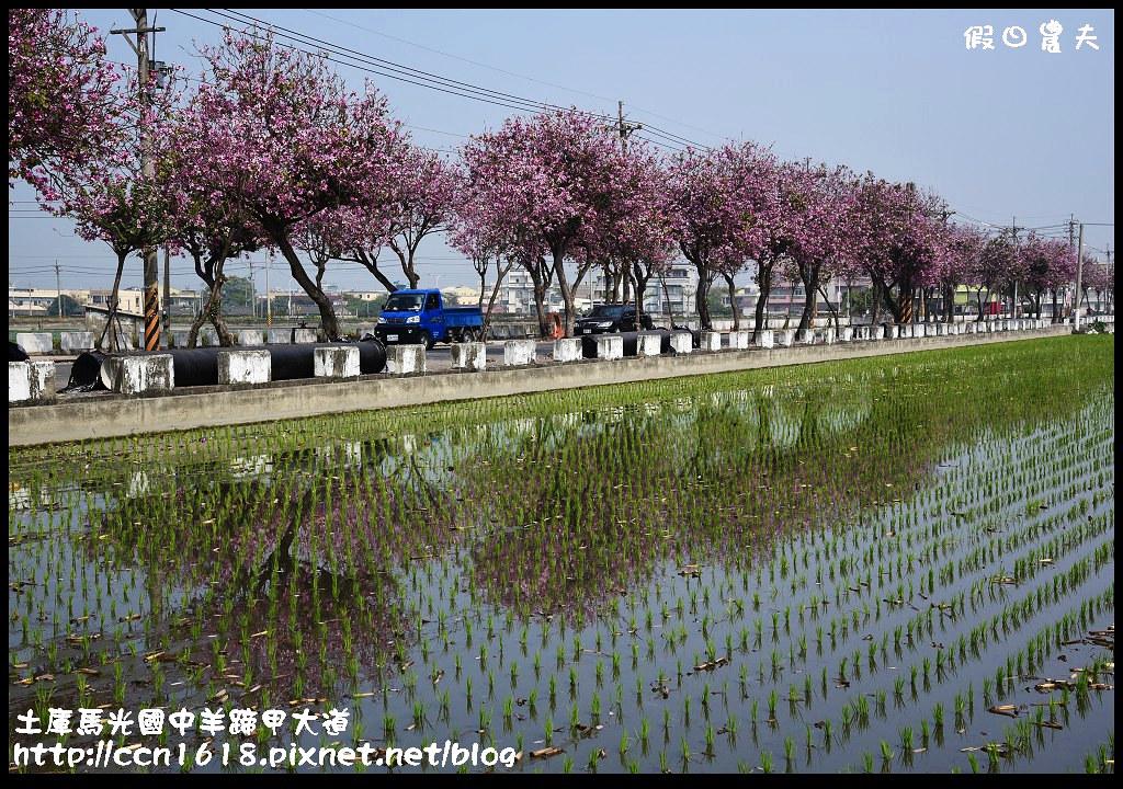 土庫馬光國中羊蹄甲大道DSC_1165