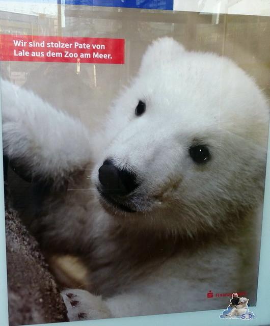 Zoo am Meer 08.03.2015  257