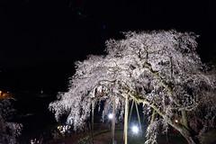 150328_Okazaki_CBV_54