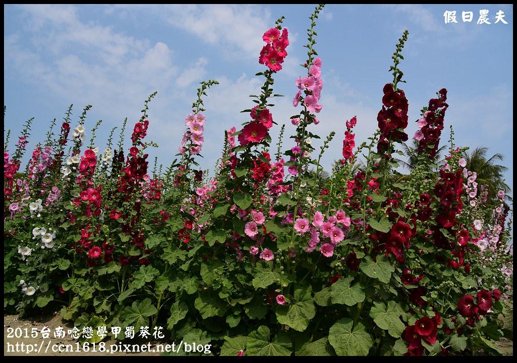 2015台南唸戀學甲蜀葵花DSC_1447