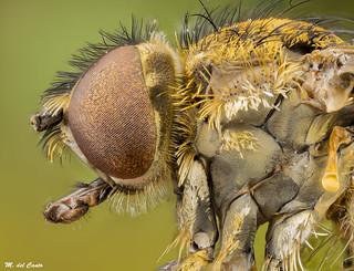 rollingfly