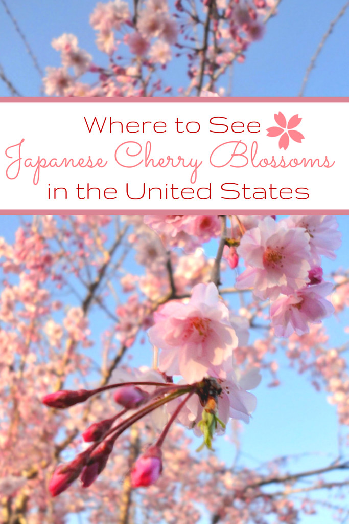 us-cherry-blossoms-pin2