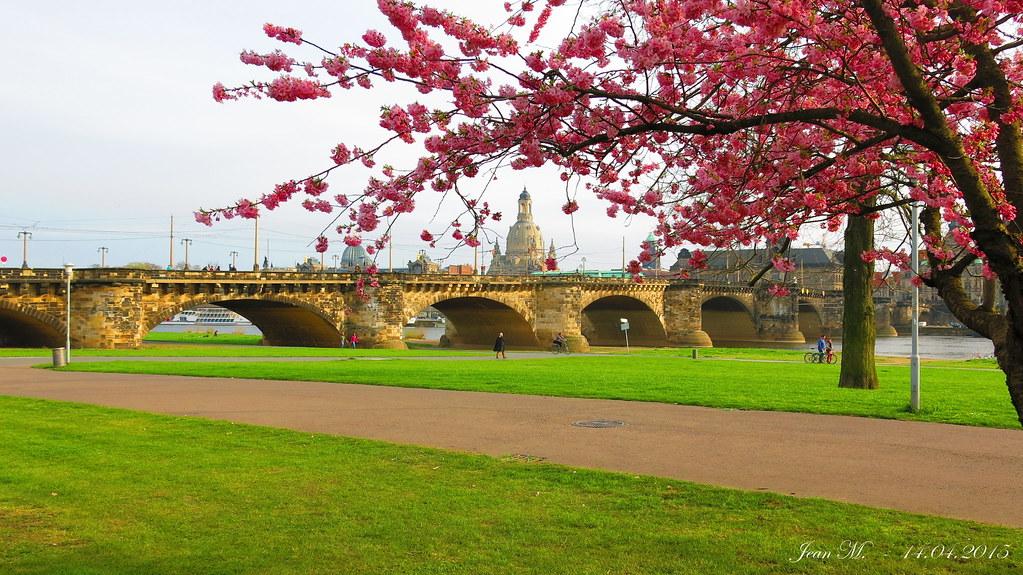 Dresden - Elbwiese mit Blick auf die Augustusbrücke und der Frauenkirche