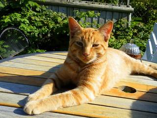 chilled Ginger