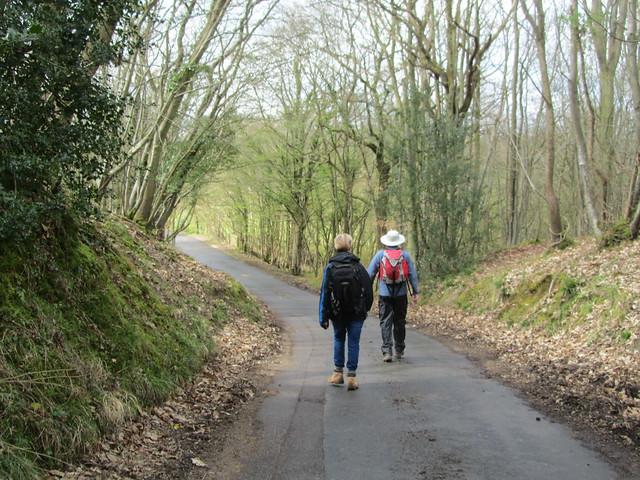 UK - East Sussex - Near Robertsbridge - Walking along road