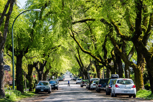 road street trees cars sign vancouver nikon bc streetscene foliage stopsign cropped audi vignetting vancouverbc eastvan roadway eastvancouver d600 vancouvercity tedmcgrath cans2s grandviewwoodlands grandviewwoodland tedsphotos nikonfx d600fx