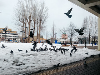 Teine, Hokkaido, 2015