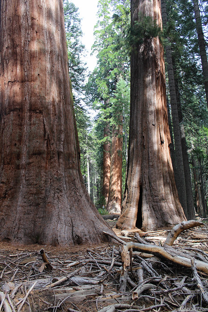 Calaveras Big Trees SP