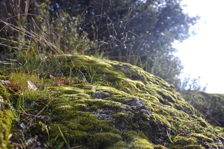 lara-vazquez-mad-lula-spring-lights-moss