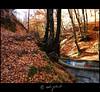 Fall in Olăneşti, Romania