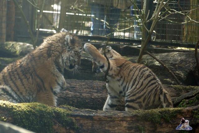 Zoo Eberswalde 22.03.2015   92