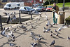 Feeding Pigeons at Twickenham