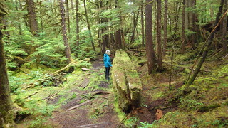Canoe Blank - Haida Gwaii