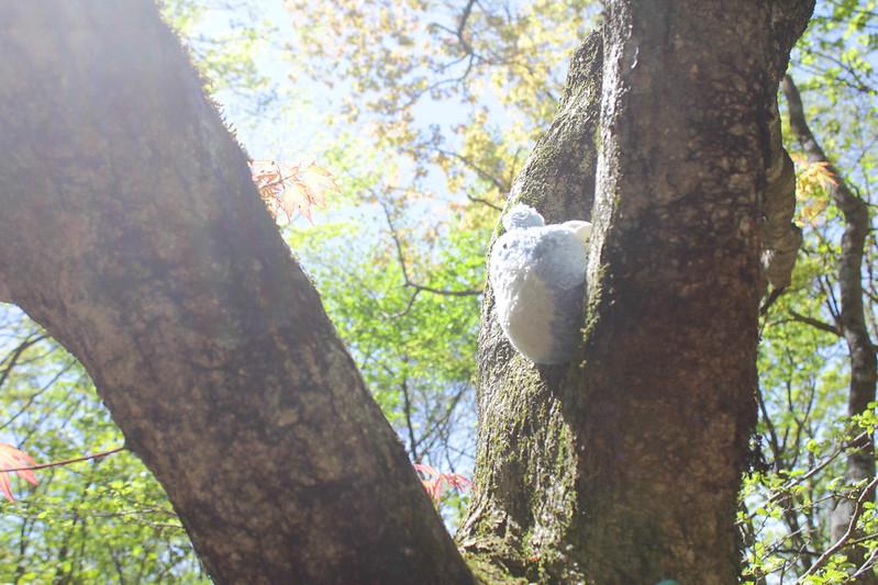 2014-05-07_03324_九州登山旅行.jpg