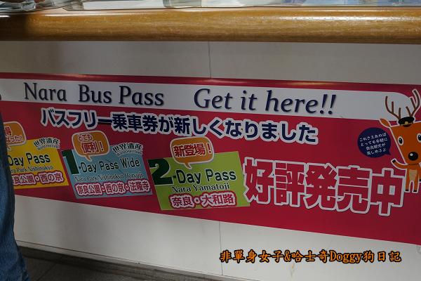 日本奈良公園東大寺04
