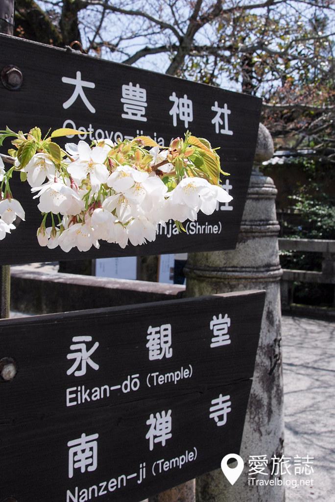 京都赏樱景点 哲学之道 40