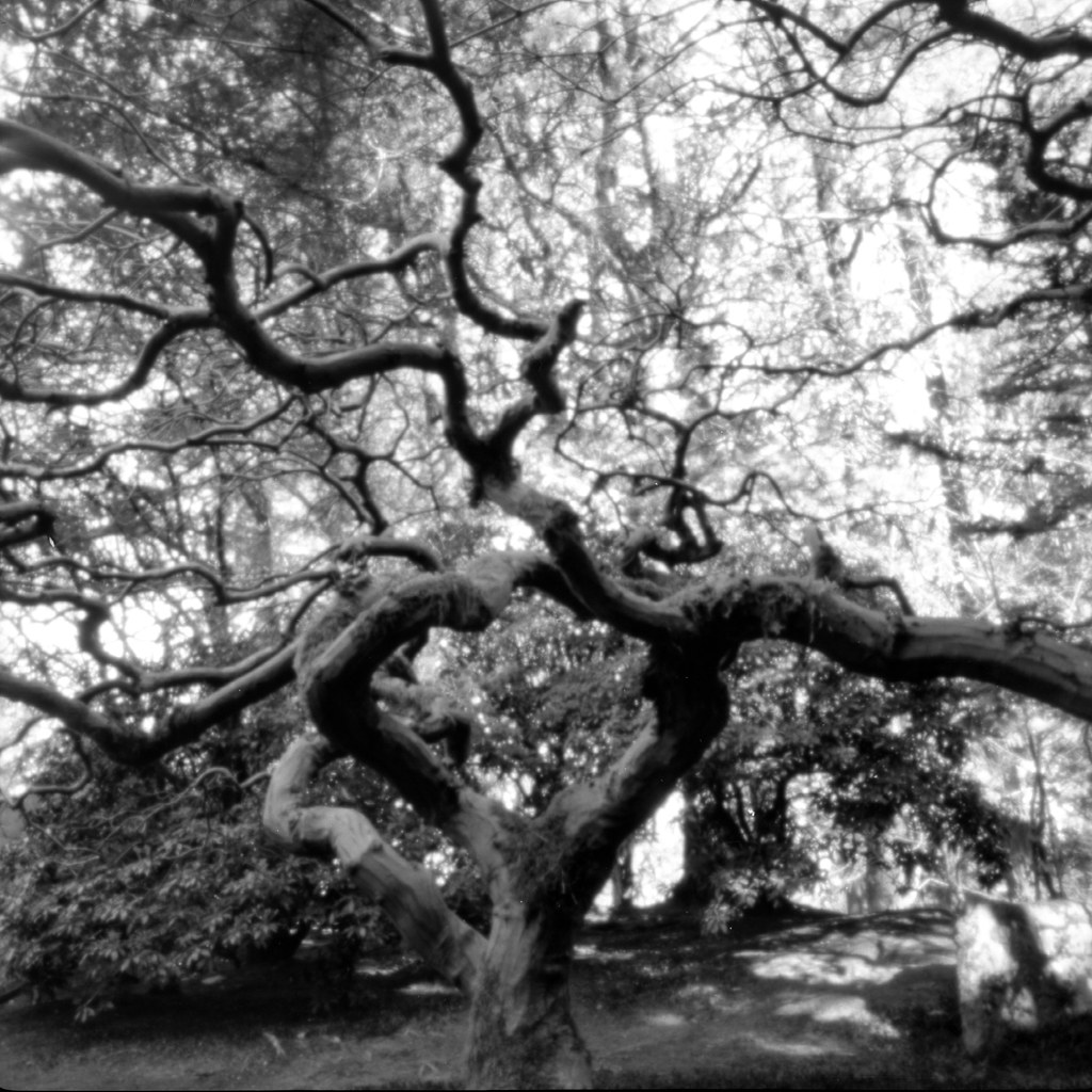 The tree in B&W